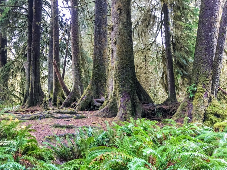 Trees Grow Taller