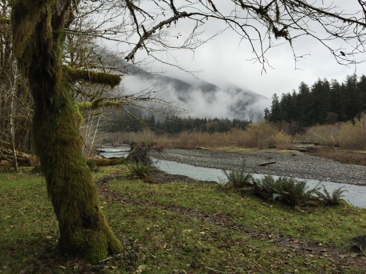 Hoh River from the Hall of Mosses
