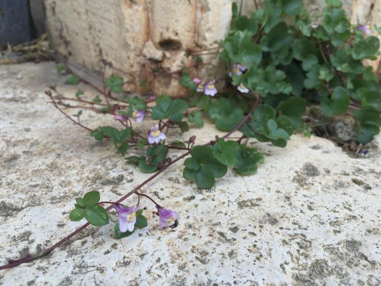 Little Flowers of Villa Borghese