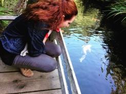 Fish Playing Coy