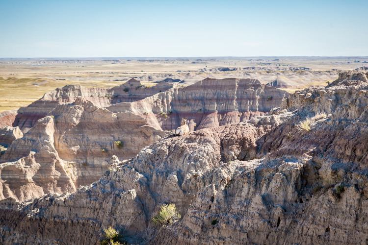 Spot the Wildlife in Badlands