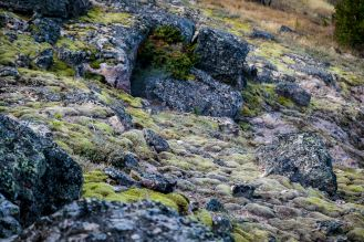 Moss Covered Slopes