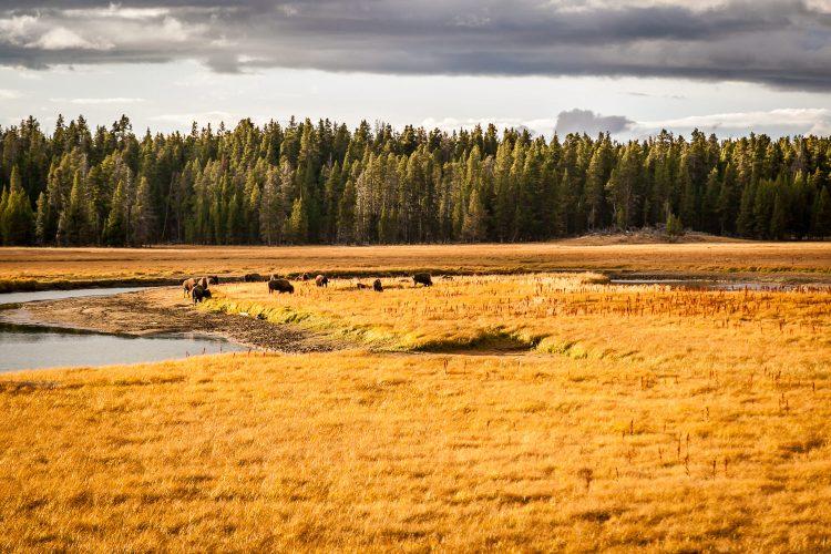 Near Yellowstone River