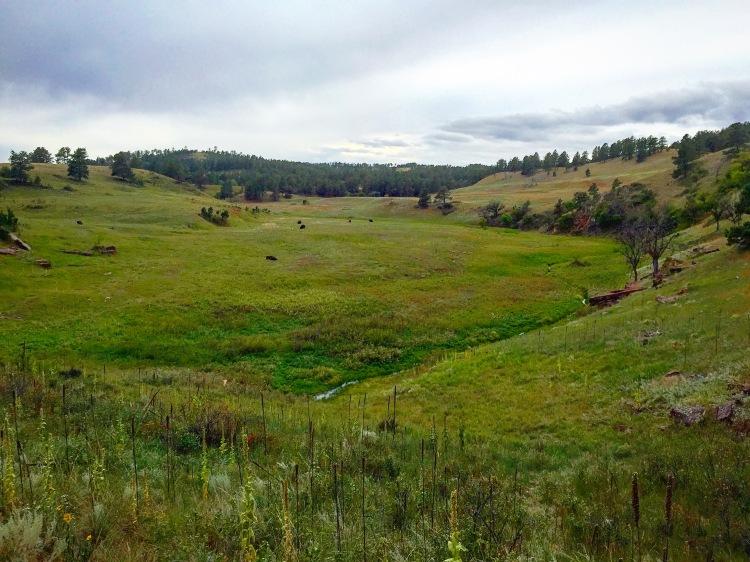 Prairies of Custer State Park