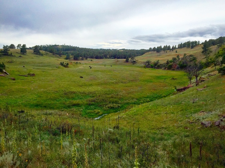 Prairies of Custer State Park