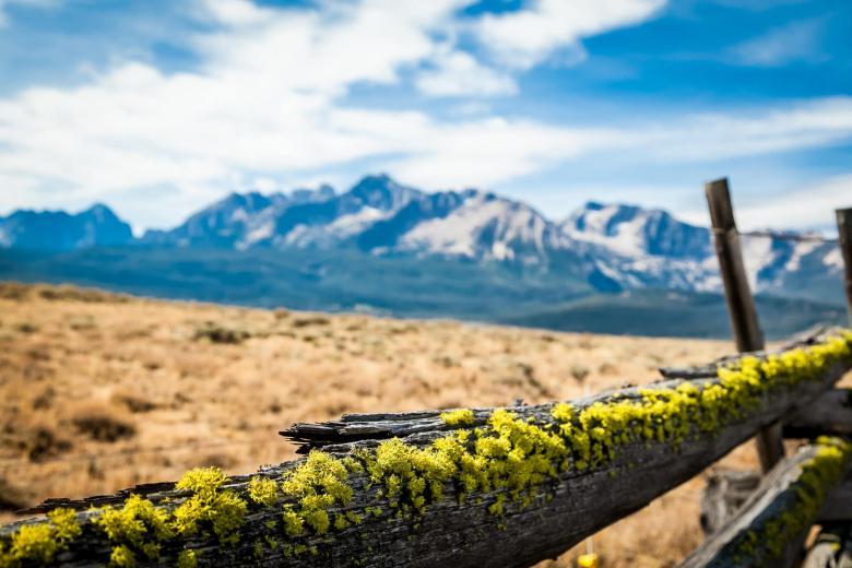 Cowboy Fences