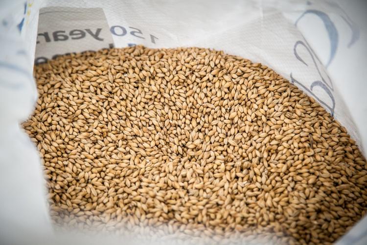 Barley at Ancestry Brewery