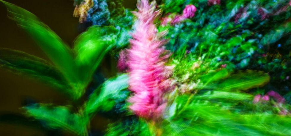 Dulcinea by Paolo Ferraris Colors