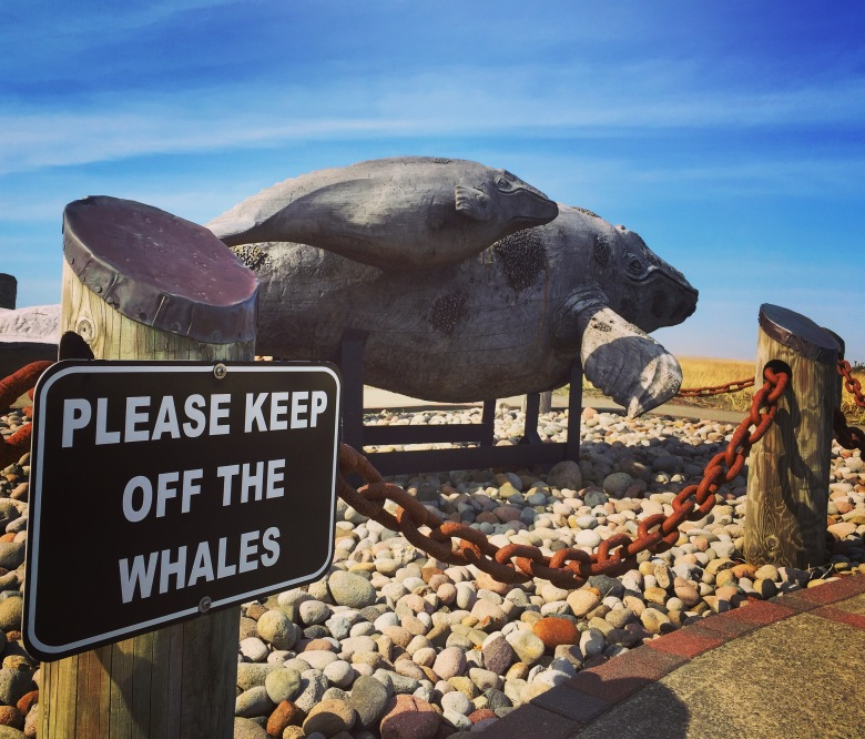 Please Keep Off Whales