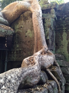 Beautiful Ruin of Ta Prohm Angkor Wat Cambodia