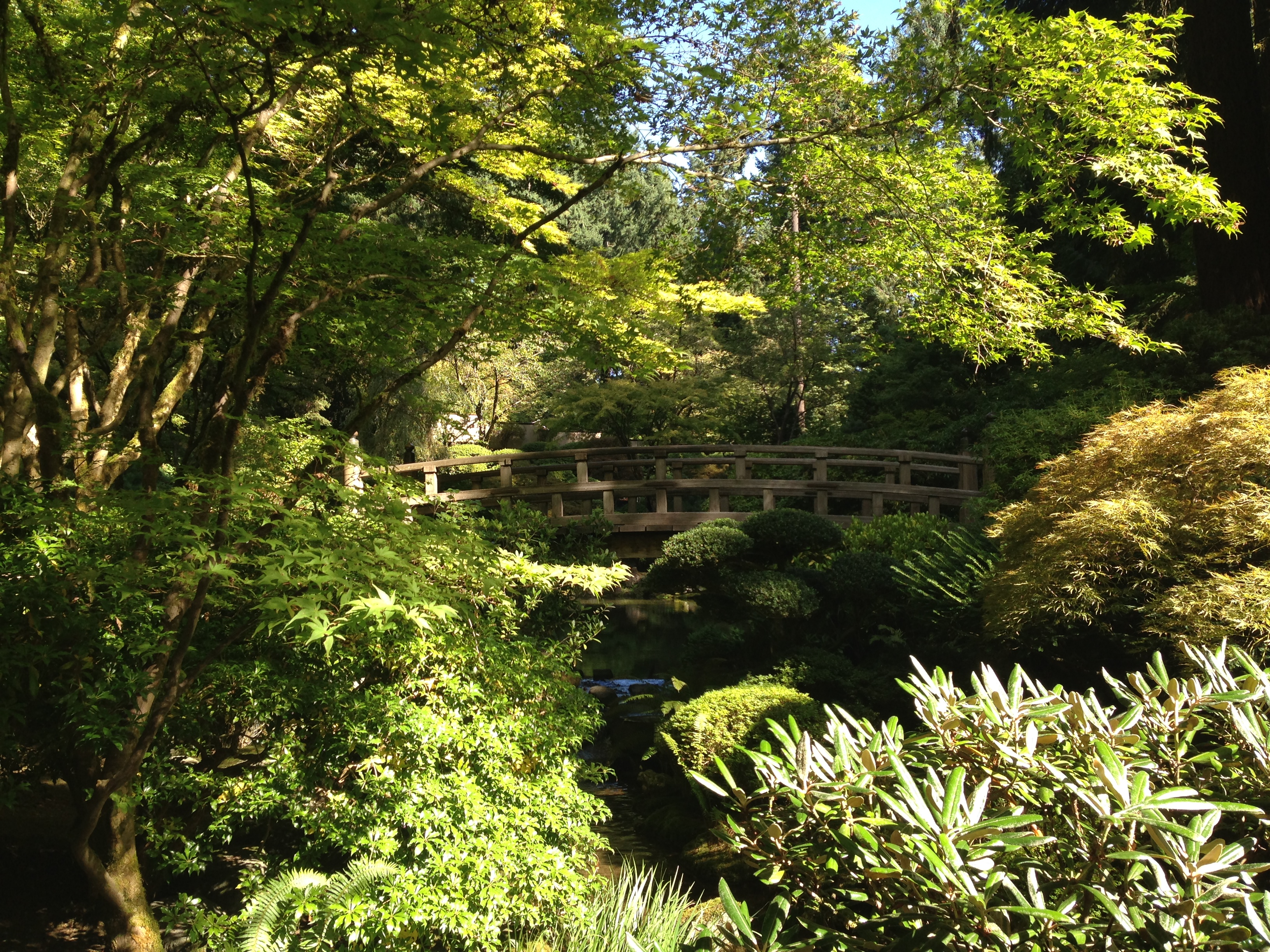 Greenery in Japanese Garden