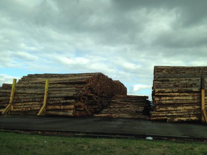 Oregon Roadside