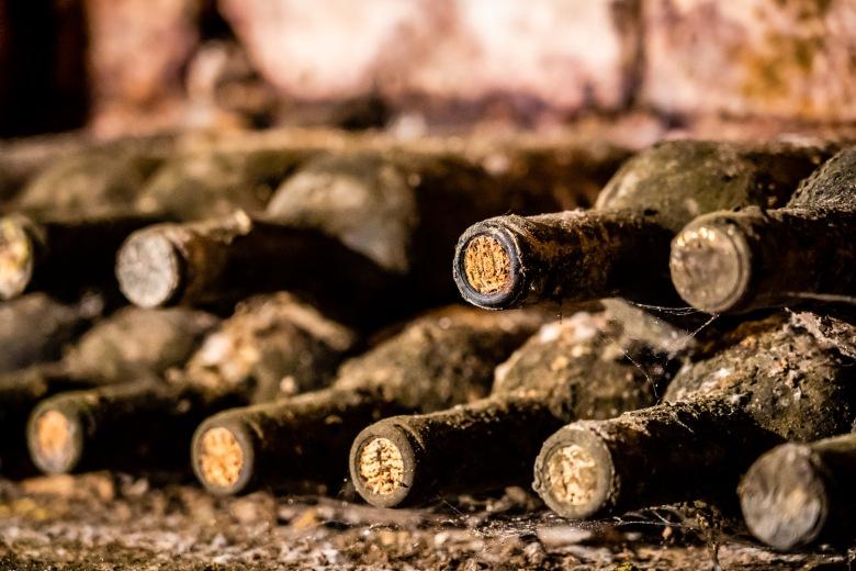 Cellar Mold at Sottimano Wines