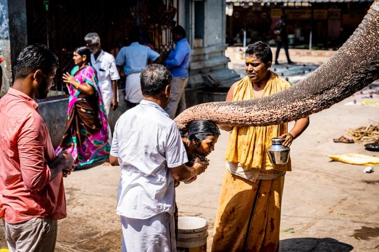 Travel India Amma Mandapam Ritual Center Temple Elephant
