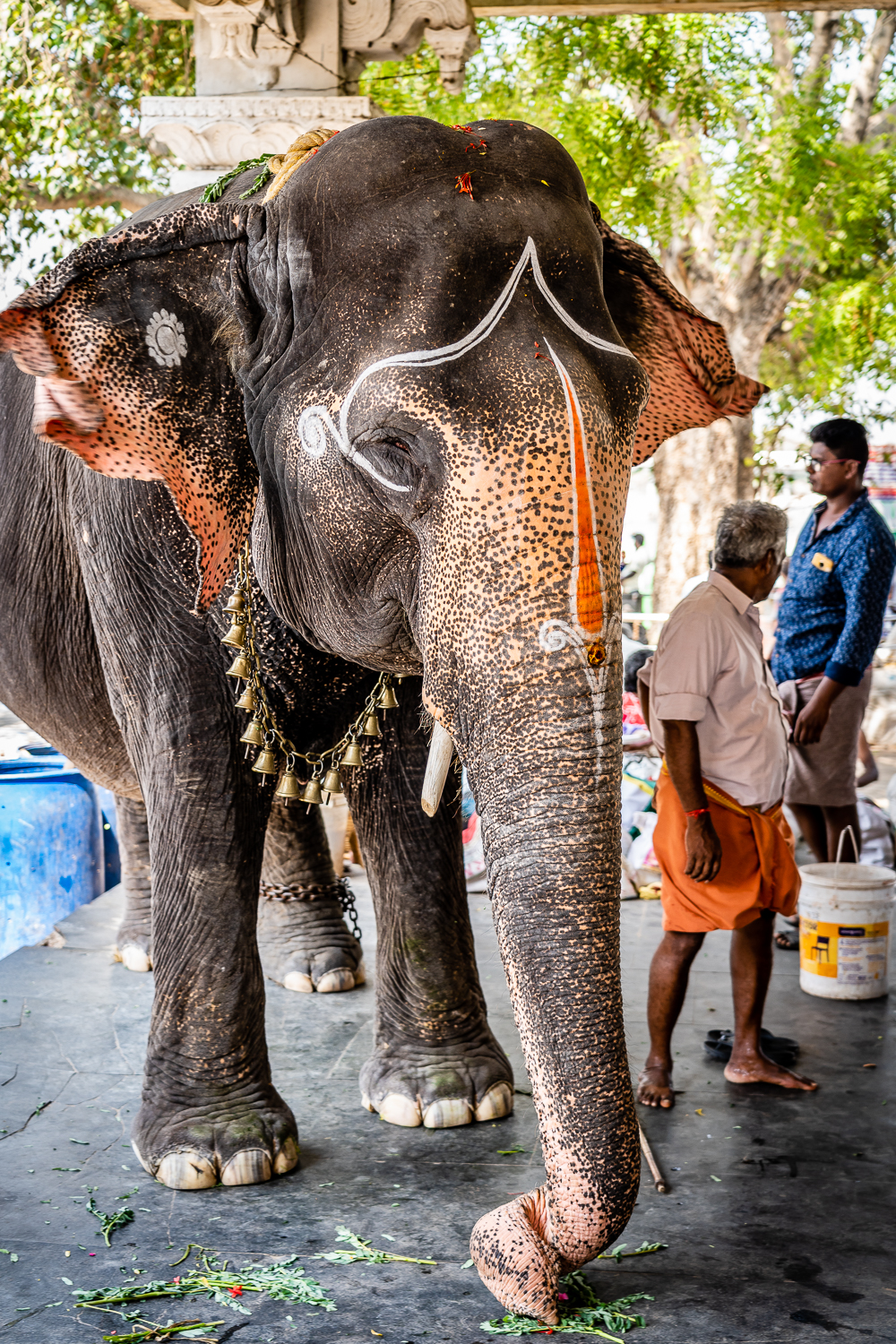 Travel India Amma Mandapam Ritual Center Temple Elephant