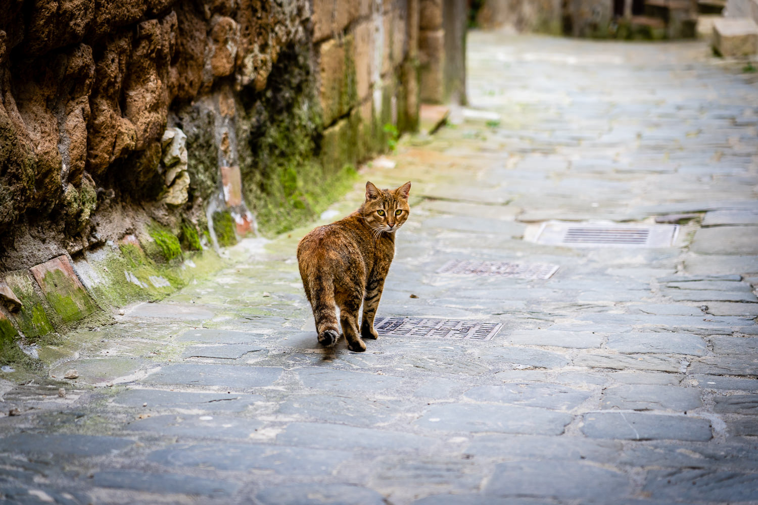 Cat in Sorano Italy