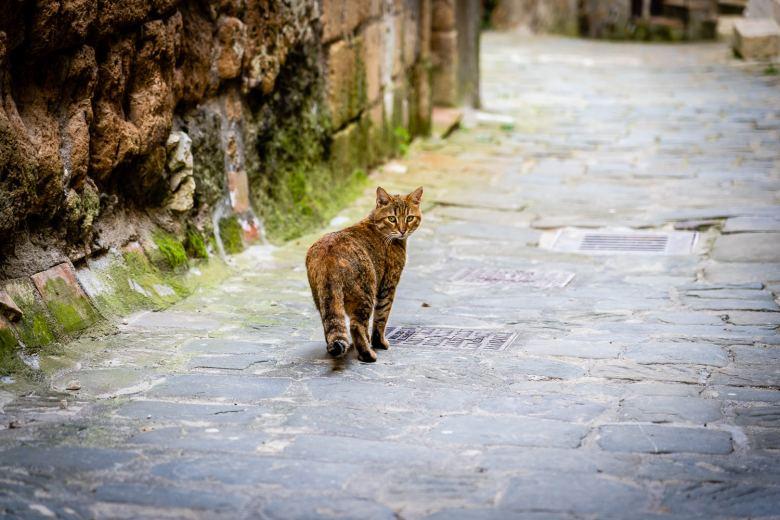 Cat in Sorano Italy