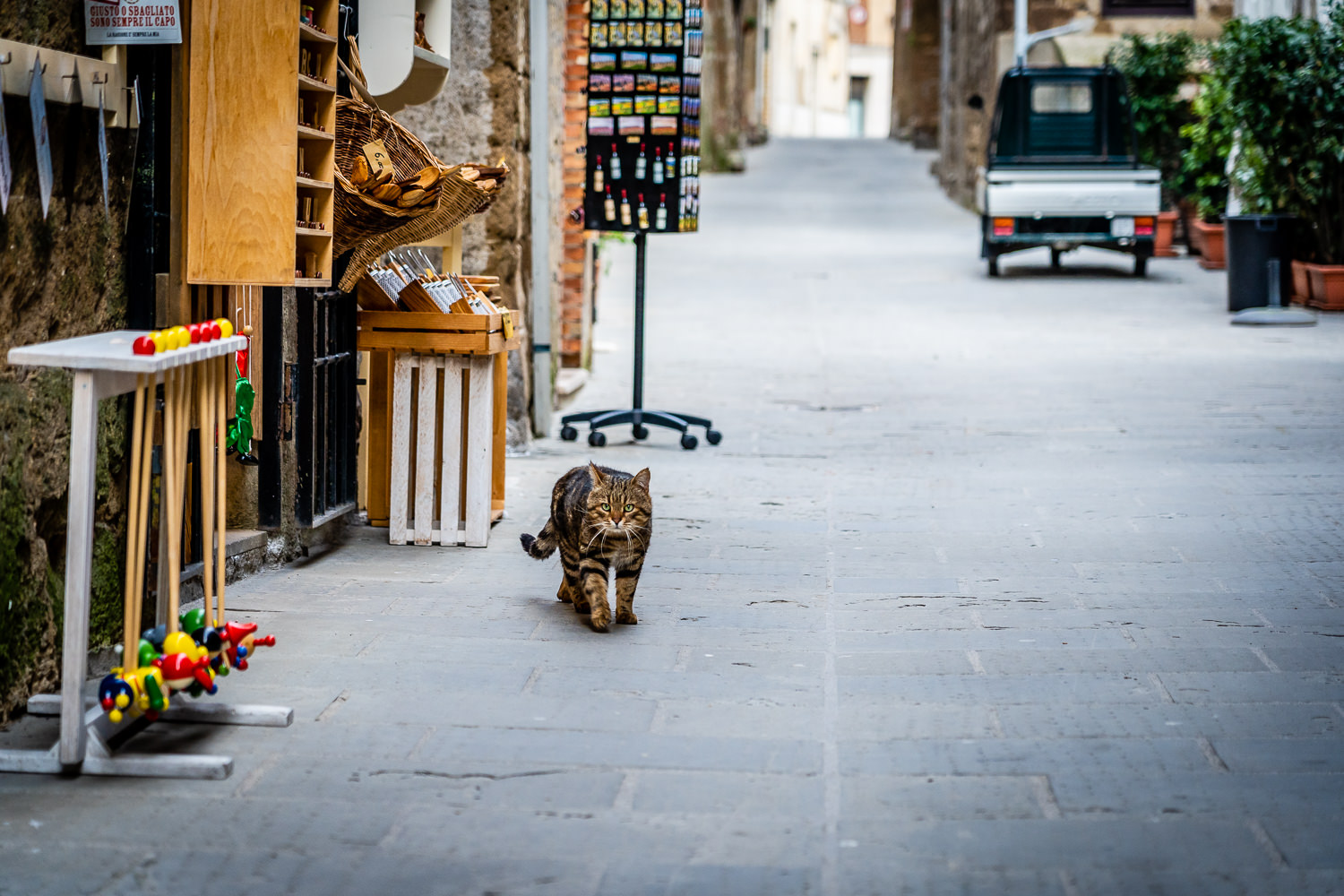 Italy Pic of the Day Pitigliano Stray Cat