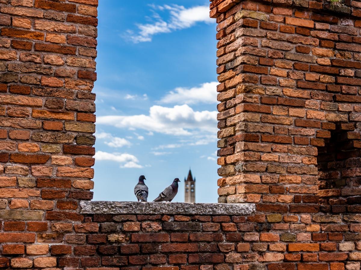 Italy Pic of the Day Verona Scaliger Bridge