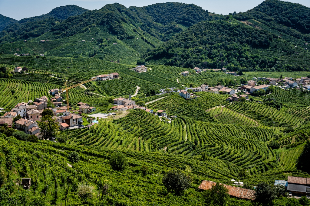 Italy Pic of the Day Prosecco Vineyard View
