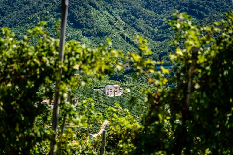 Prosecco Vineyard Keyhold