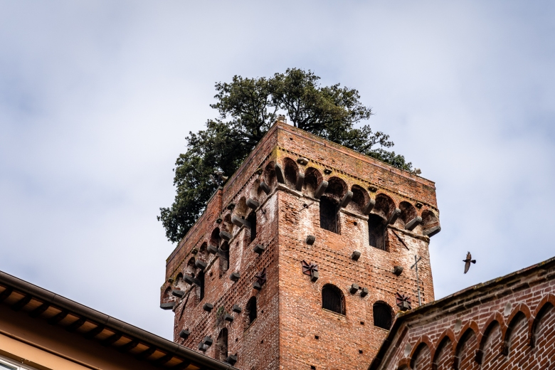 Rooftop Garden Guinigi Tower in Lucca, Tuscany, Italy